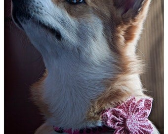 Fabric Flowers for Pet Collars