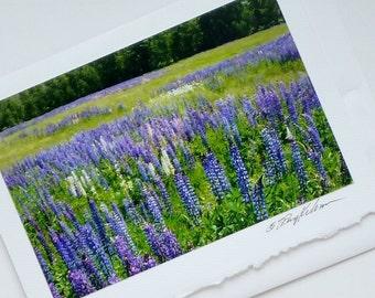 photo card lupine field