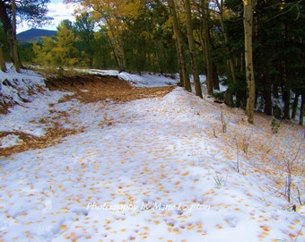 Aspen Leaves on the Snowy Path in the Colorado Mountains Photography