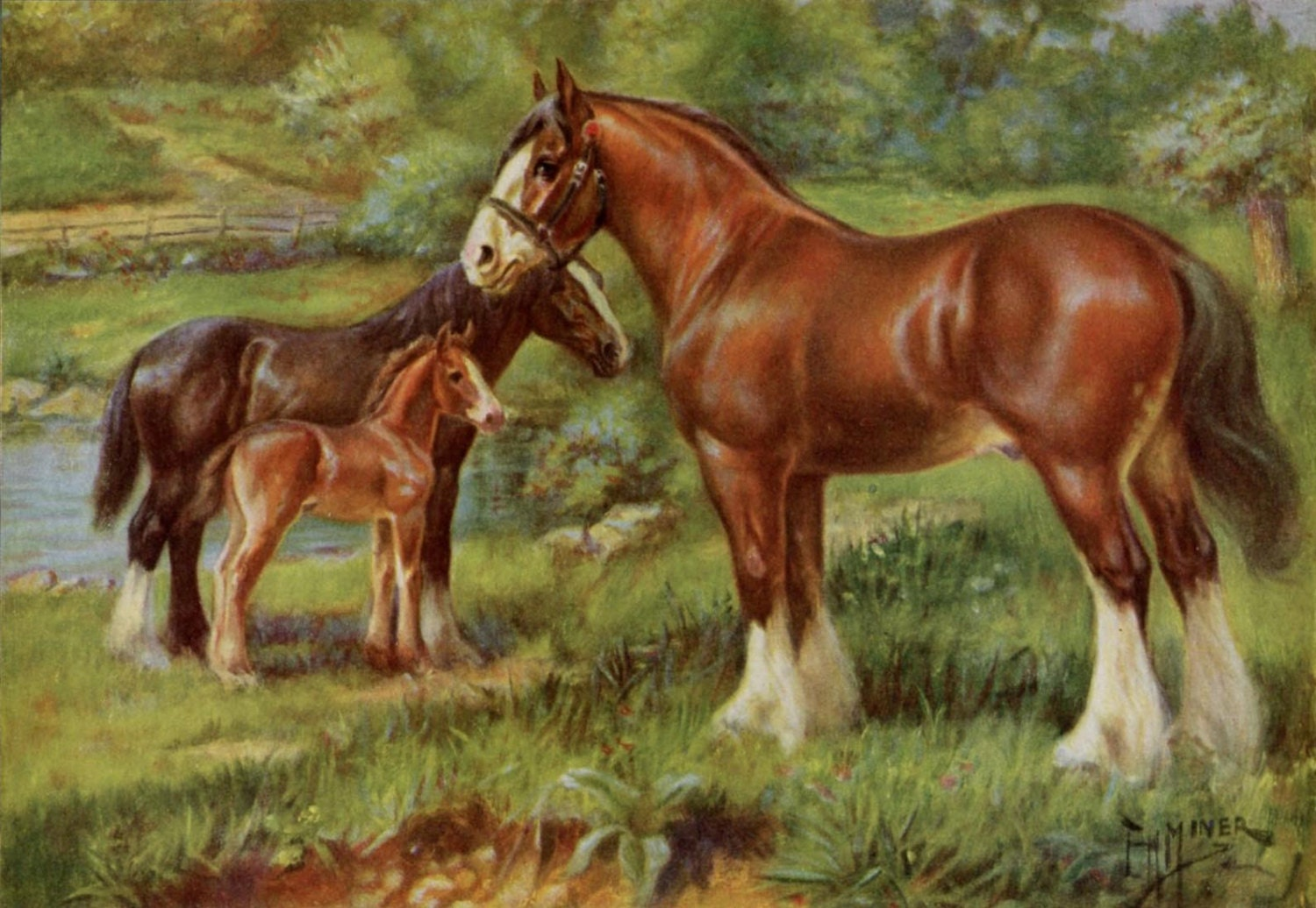 paint clydesdale - photo #30