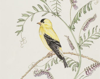 Goldfinch Original Pen & Ink Drawing