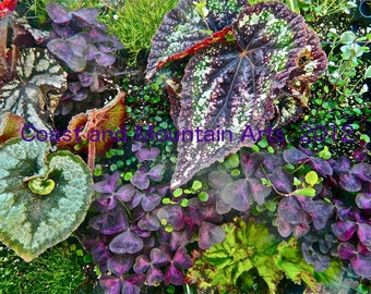Coleus Photo card, Floral photo card,