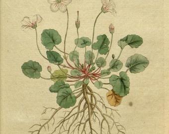 Botanical chart, Botanical pictures, Art print botanical, 18