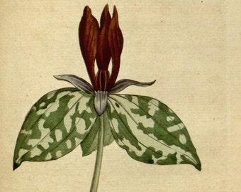 Art print botanical, Botanical pictures, Botanical chart, 40