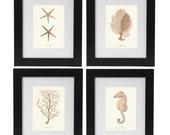 Beach Art Print Set, Nautical Posters in Sandy Blush, Nautical Illustrations, Corals, Seahorse, Starfish Prints, Coastal Living Marine Decor