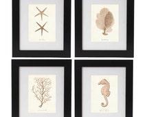 Beach Art Nautical Print Set, Nautical Posters in Bahama Blush, Nautical Wall Art, Corals, Seahorse, Starfish Prints, Coastal Living Decor