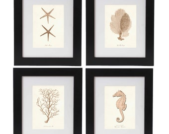 Beach Art Nautical Print Set, Nautical Posters in Bahama Blush, Nautical Wall Art, Corals, Seahorse, Starfish Prints, Coastal Living Decor