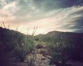 Landscape Photography- Nature Print- Pink Sky Desert Photograph Ocotillo Botanical Print 8x10