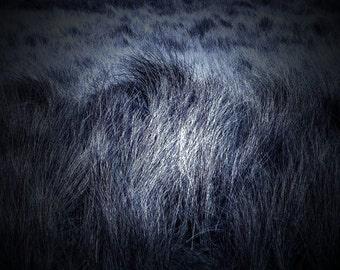Purple Reeds Field, Grass Ireland Landscape Photography. Home Decor Print