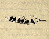Printable Image Birds on Tree Branch Graphic Bird Artwork Digital Download Antique Clip Art for Transfers Printing etc HQ 300dpi No.3698