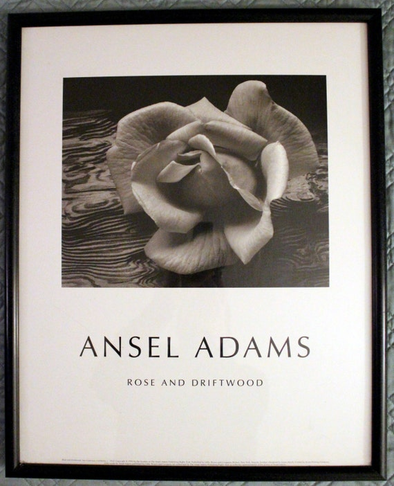 ansel adams rose and drift wood Ansel easton adams (february 20, 1902  as demonstrated in rose and driftwood  ansel adams in the national parks:.