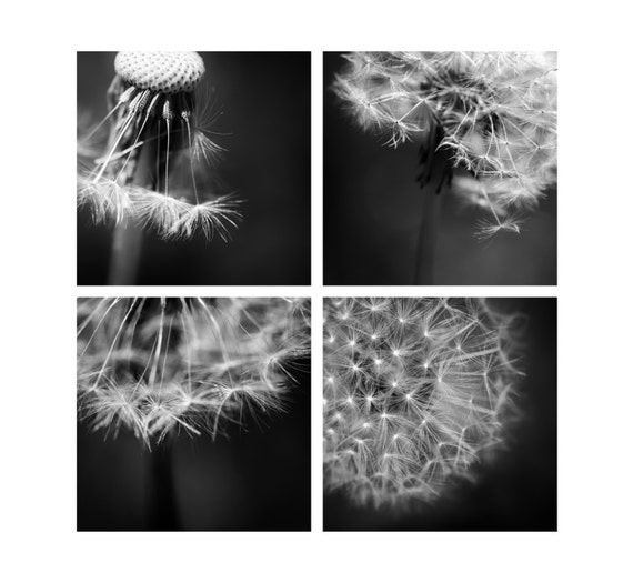 Set of 4 Dandelion Macros. Nature Photography. Monochrome. Black & White Botanical Prints by OneFrameStories.