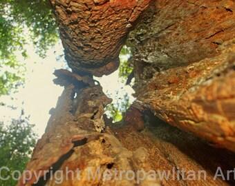 8x10 photograph hollow tree stump.. Lacawac Sanctuary, Lake Wallenpaupak