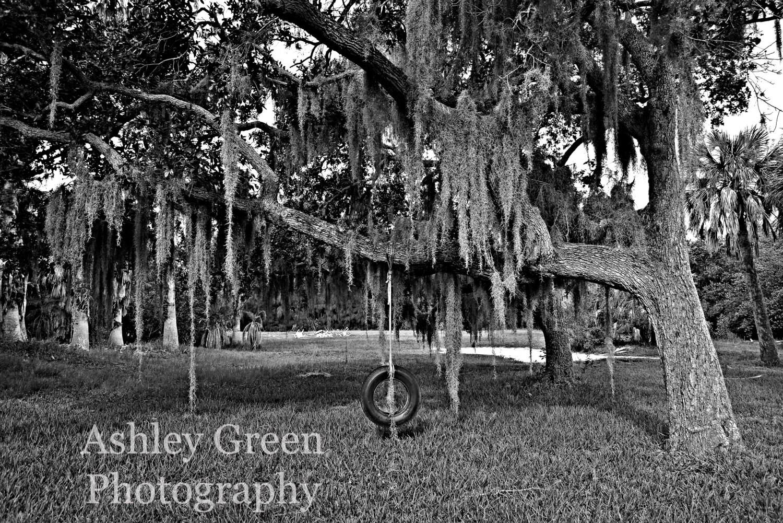 floridian backyard tire swing photograph by ashleygreenphoto
