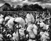 Cotton, 8x12 original signed fine art photographic print