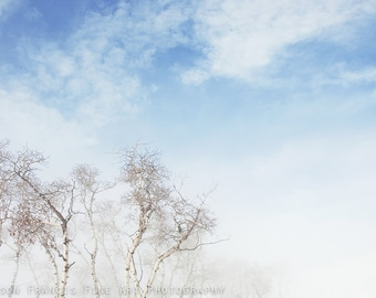 Mist & Sky: Birch trees, tree photography, soft clouds, clear blue skies, winter woodland, winter landscape, graceful branches, peaceful art