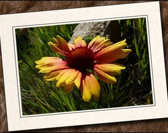 3 Wildflower Photo Note Cards - Wildflower Note Cards - 5x7 Wildflower Cards - Blank Flower Note Card - Flower Greeting Cards (IN90)