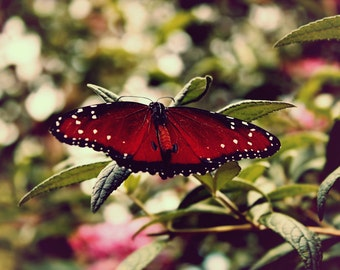 Wings, Butterfly Photography, Wall Decor, Butterfly Print, Nature Print, Garden Photography