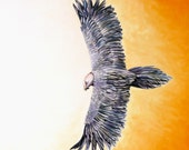 bearded vulture - inunbattitodali