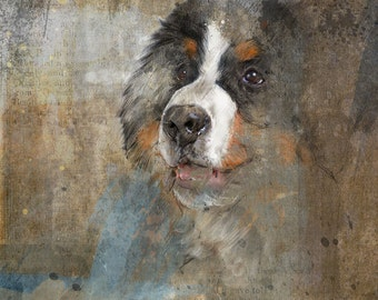 Bernese Mountain Dog: Limited edition print.