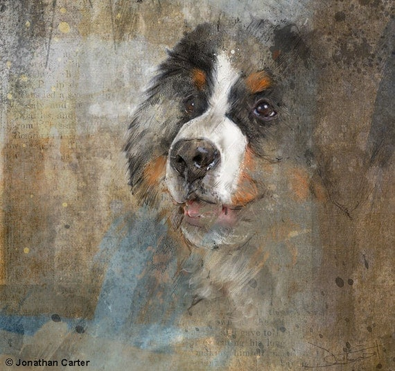 Bernese Mountain Dog Small Open Edition Print