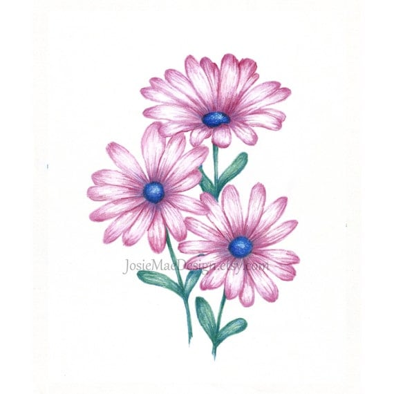Items Similar To Flower Drawing Daisy Pink Print