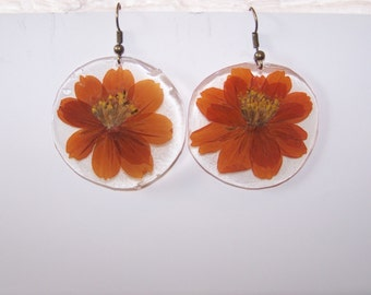 Rust colored Cosmos