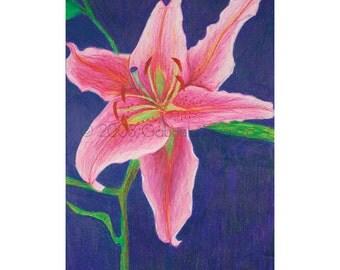 Lily Digital Print of Original Color Pencil Drawing