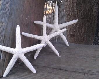 White Sea Star