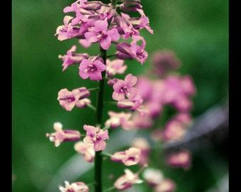 Tiny Pink Flowers - Print