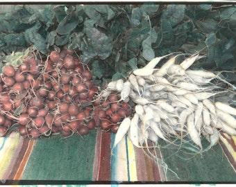 vintage photo Farmers Market Radishes Original painted photograph