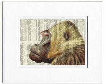 Baboon print - watercolor
