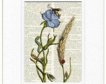 1600's botanical no. 20 print