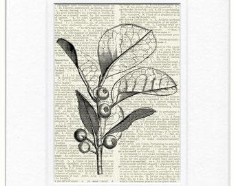 18oo's evergreen tree print