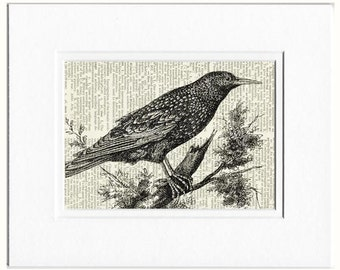Starling dictionary page print