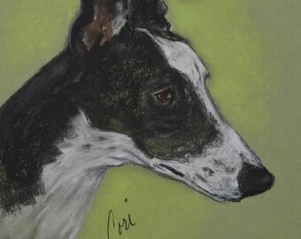 Greyhound Dog Art Original Pastel Drawing By Cori Solomon