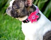 Damask Dog Collar with Flower / Removable and Adjustable / Girly Dog Collar / Style: Princess Damask / Available in 4 Sizes
