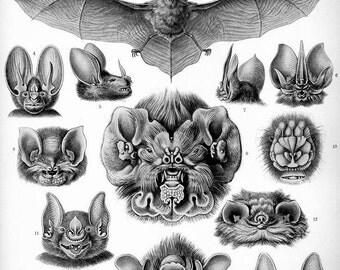 Instant Download Haeckel Chiroptera Bats in the Belfry You Print Digital Image Steampunk Halloween Bats