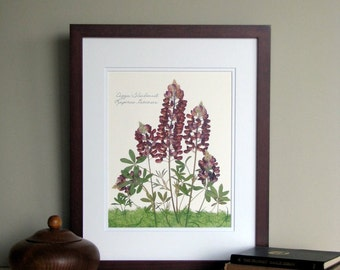 Pressed flower botanical print, 11x14 double matted, Texas Aggie Maroon Bluebonnet, Wildflowers,  wall art no. 0019