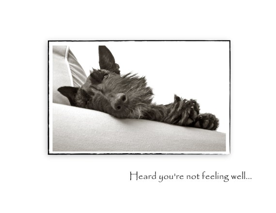 Scottie Dog Get Well - Greeting Card - Scottish Terrier Photo - Dog Photography - Well Wishes Cards