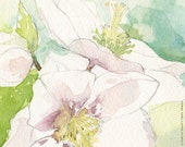 White Helleborus: Watercolor Flower Print (8x10)