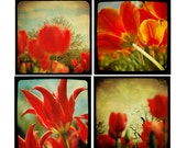 Tulip Photography Set - Four 5x5 Photographs - Red Orange Yellow Photos Modern Bright Flower Wall Decor TTV Vintage Style