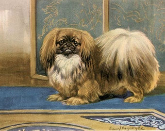 Pekingese Vintage Dog Illustration - Edwin Megargee - 1940s Original Page