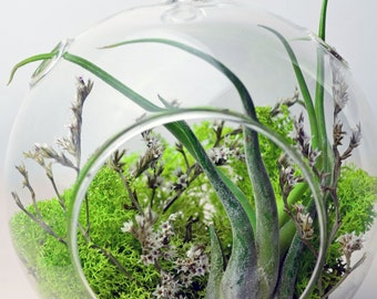Air Plant Terrarium - Hanging Glass Orb - Green - White - Home and Garden -  Green Gift - Home Decor