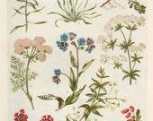 Vintage Antique 1930s Flowers botanical bookplate original lithograph art print illustration 5641