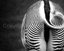 GREVY'S ZEBRA photography - Imperial Behind.  Wall Decor. Black & White, minimalist image