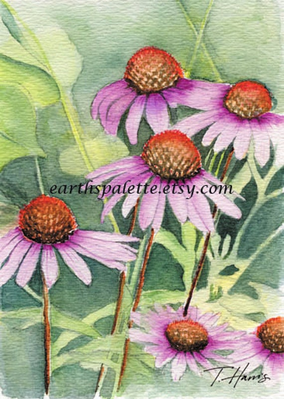 Purple cone flower painting 5x7 print from original watercolor painting nature painting floral painting Earthspalette