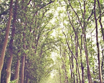 Dreamy Forest Landscape - Photo Print of Versailles, France - Trees, Light, Sunshine, Green and Yellow, Brown - Path, Fairytale, Tall