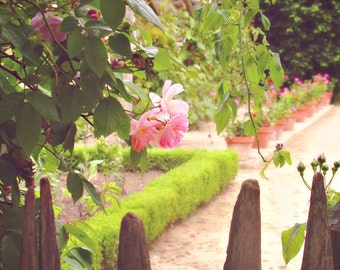 Shabby Chic Photo 8x10 - Garden, Versailles, Marie Antoinette's Garden - Roses, Gate, Cottage, Pink and Green, Fairytale, Romantic, Love