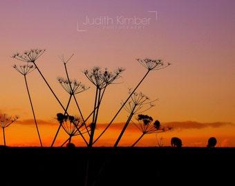 Landscape Fine Art Photography - Irish Sunset Print - Northern Ireland - Sheep in the Sunset - 8 x 10